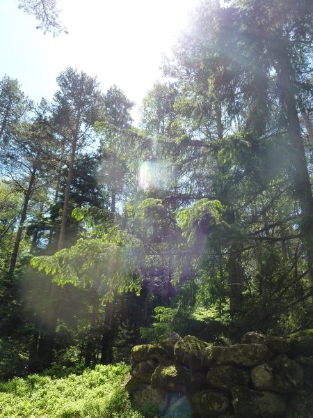 Phénomère lumineux étrange - haut-lieu en Alsace